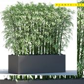 Plants 189