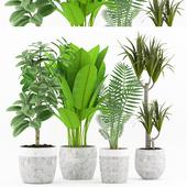 Plant 50