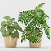 Plant 55