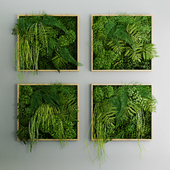 Set of moss and fern phyto modules