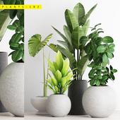 PLANTS 192