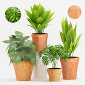 Plant 59