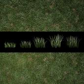 Grass for Exteriors