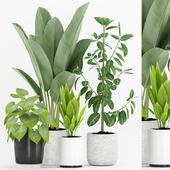 Plant 63