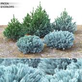 Spruce. Set # 1 (0.5 m - 1.4 m)