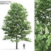 Chestnut # 1 (15 m)