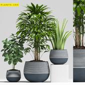 Plants 194