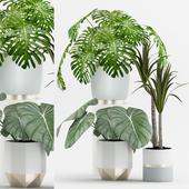 Plant 64