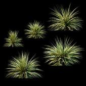 Plants for Exterior v2