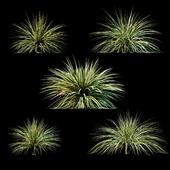 Plants for exterior v3