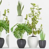 Plant 65