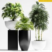 PLANTS 195