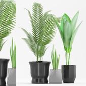 Plant 69