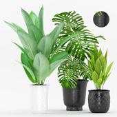 Plant 67