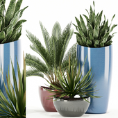 Plants collection 99 Awesomeplanters