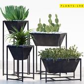 PLANTS 198