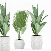 Plant 71