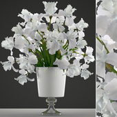 Collection of flowers 45. White Irises.