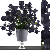 Collection of flowers 46. Black Irises.