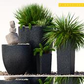 plants 202