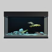 Predatory Fish And Aquarium
