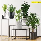 PLANTS 203