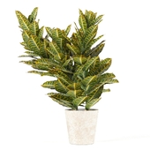 Codemic plant