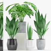 Plant 74