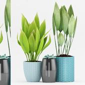 Plant 77