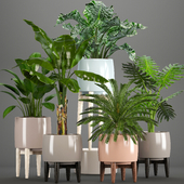 Коллекция растений 226.