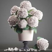 Collection of flowers 54. Hortensia.