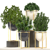 Коллекция растений 227.