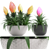Collection of plants 230. Bromelia.