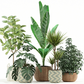 Plants collection 116