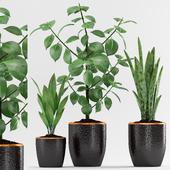 Plant 86