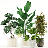 Plants collection 117