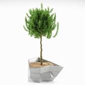 plant 7