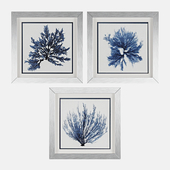 Coastal Seaweed 3 Piece Framed Painting Print Set by Propac Images