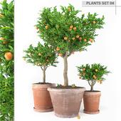 plants set 4