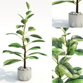 plant_825