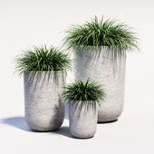 Plants_1