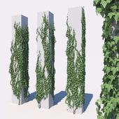 Ivy set 3