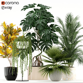 Plants collection 124