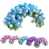 Plants Hydrangea set 05