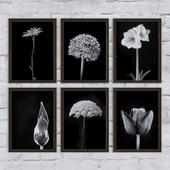Flowers | set 7