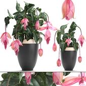Коллекция растений 234.