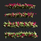 Plant Geranium Facade v2