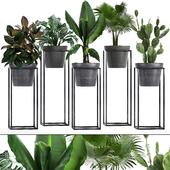 Коллекция растений 242.