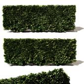 Buxus Microphylla - 3 Modular Pieces