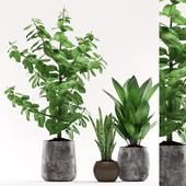 Plants 95